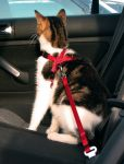 Car harness for a cat